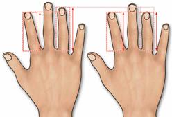 manos-longitud-dedos.jpg
